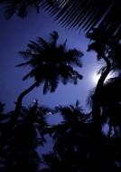 Palms to the Light