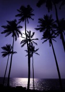 Palms into the Light
