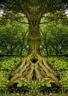 Wood Entity